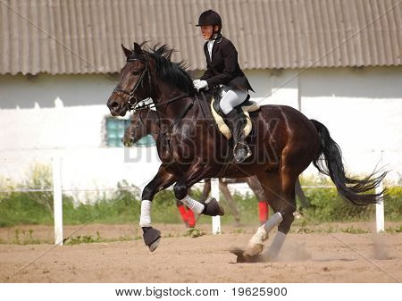show jumper horse and show jumper poster