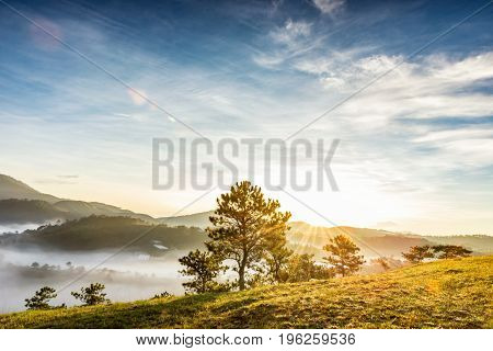 Majestic foggy mountain with green tree in the beautiful sunlight