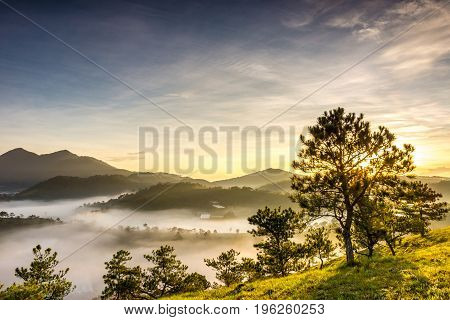 Beautiful sunrise on foggy mountain with sunlight through a tree
