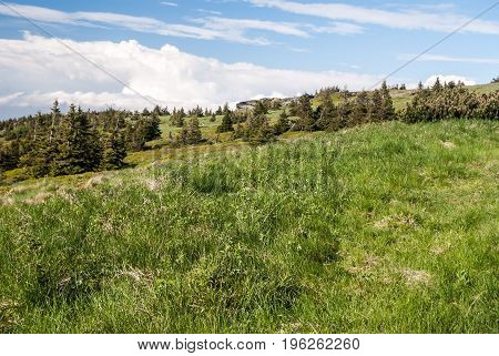 mountain meadow with small trees Tabulove skaly rocks and blue sky with clouds near Praded hill in Czech republic