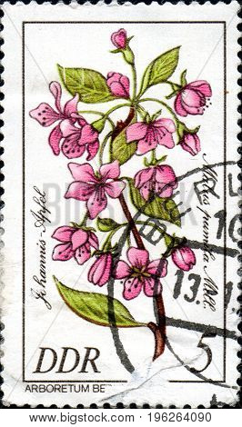 UKRAINE - CIRCA 2017: A stamp printed in DDR shows Paradise apple Malus pumila from series Rare Trees And Shrubs circa 1981