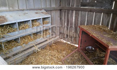Interior of chicken coop with 10-hole nesting box.
