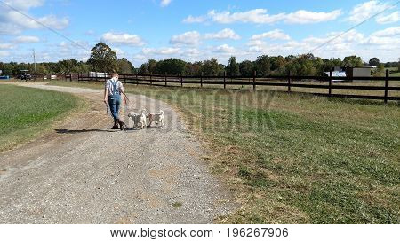 Young girl crossing driveway with two leashed Akbash puppies.
