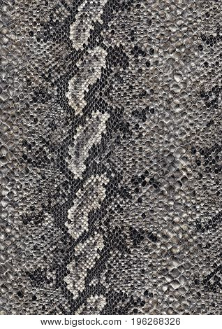 full frame scaled abstract grey patterned reptile skin surface