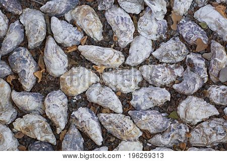 Many gray seashells on a dark brown land. Beautiful seashells with stones used as the background. A lot of different seashells piled together on the beach. Marine items.