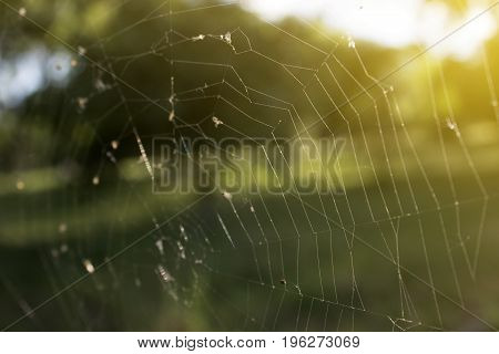 Web in the early morning in the sun
