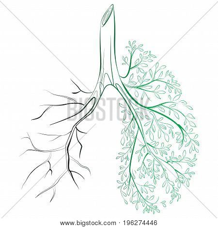 Human lungs. respiratory system. Healthy lungs. Light in the form of a tree. Line art. Drawing by hand.