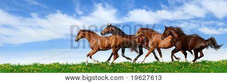 herd gallops in green field