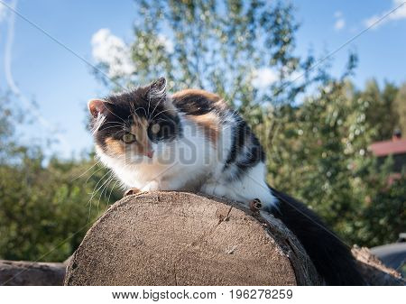 one cat sits on the wood in the summer