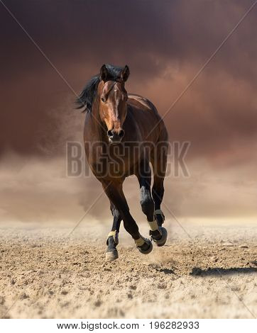 Bay horse runs forward on dark clouds and dust background