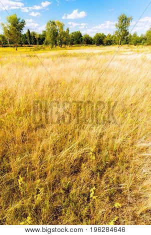Various Herbs In The Meadow