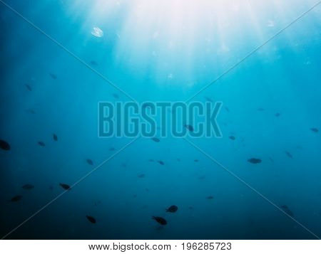 Black fishes in sea. Underwater photo with sun rays