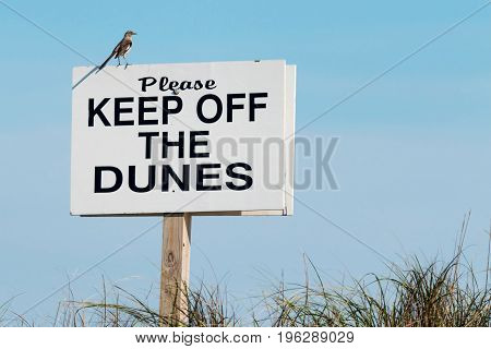 A bird looks over the dunes while standing on a white sign that reads