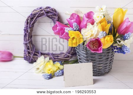Spring tulips daffodils flowers in grey bucket decorative heart and empty tag on white wooden background. Selective focus. Place for text.
