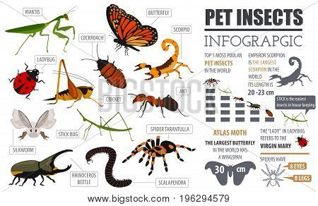 Pets_insects_7