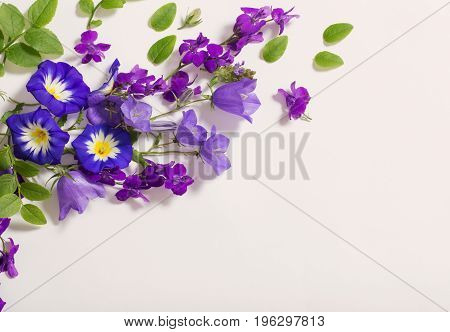 the blue summer flowers on white background