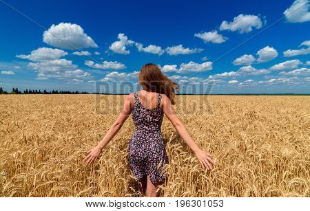 Back View Of Beautiful Young Woman Walking In Golden Wheat Field With Cloudy Blue Sky Background, Fr