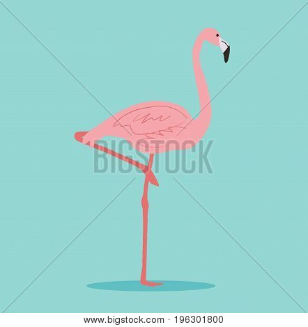 Pink flamingo isolated. Exotic bird. Vector stock.