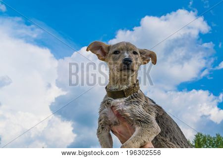 Male Hand Holding A Puppy Against The Blue Sky