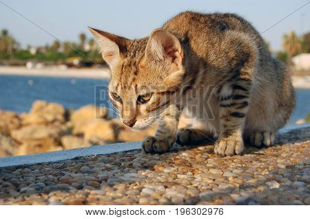 cat plays on a stone wall close up in tunasia