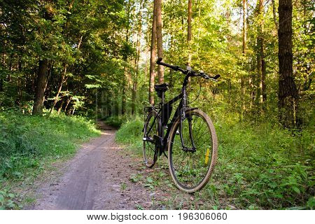 Photo of a bicycle standing on a path in forest