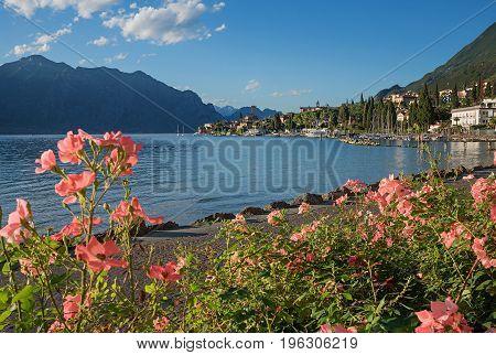 Beautiful Malcesine Lakeside Promenade With Blooming Roses