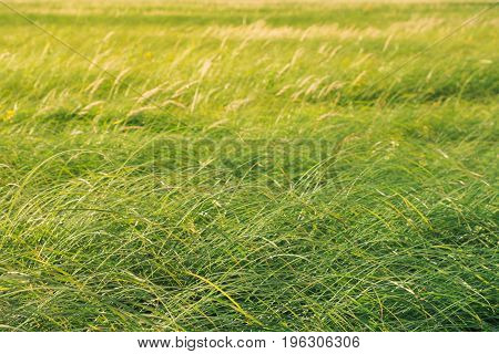 Photo of a field green juicy grass
