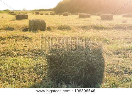 Sheaf of hay harvesting of fields in autumn