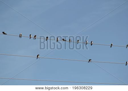 Birds sits on wire in front of blue sky, telephoto