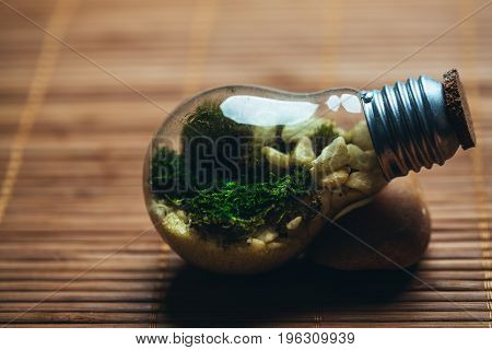 terrarium with moss and stones in bulb on a wooden background.