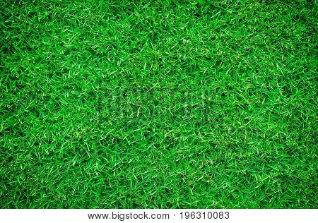 Green lawn is the lawn behind the house, it is for jogging and resting, for the grass meadow background.