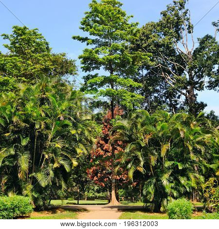 Tropical palm trees and other deciduous trees in city park