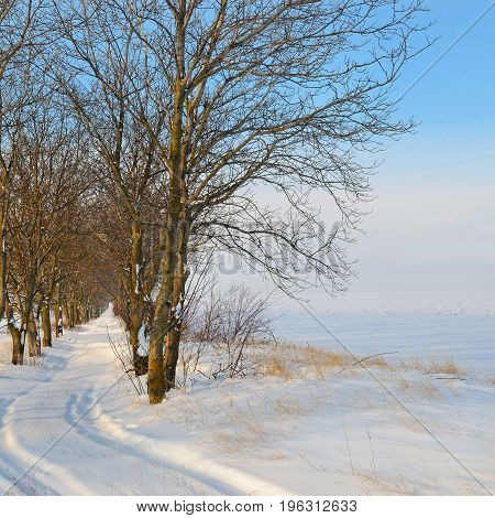 snow-covered field and trees in the snow on background of blue sky