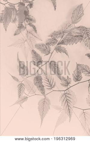 Artistic floral background with delicate leaves in monochrome