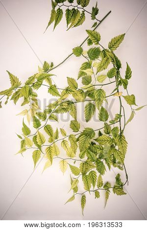 Artistic background with green leaves on white wall