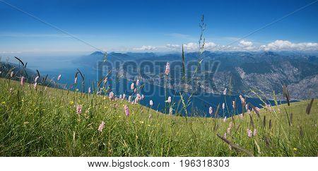 Alpine Flower Meadow At Monte Baldo Mountain