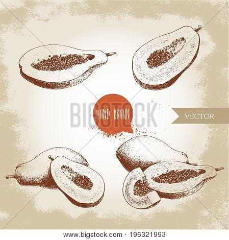 Hand drawn papaya fruits set. Whole pawpaw half cut papaya with seeds. Sketch style vector illustration of exotic food.