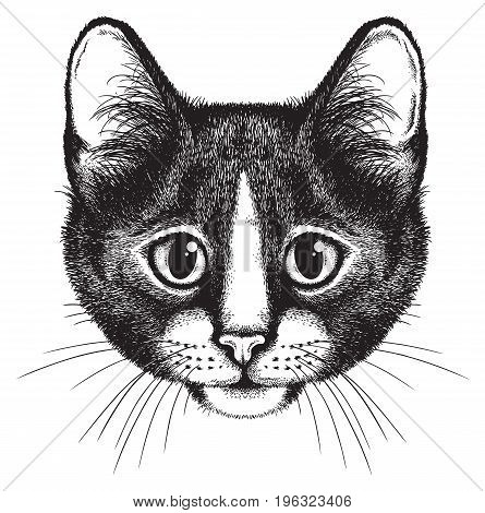Vector sketch of a black and white cat's face front view