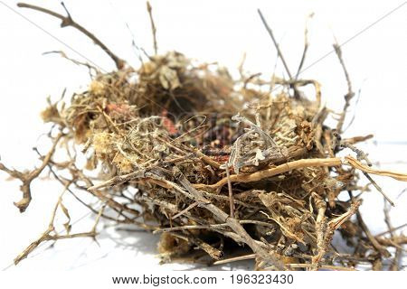 Northern Mocking Bird Nest. Nest of the Northern Mocking Bird. Mocking Bird Nest made from Twigs, Branches, Grasses, String, and filled with seeds by the mother and father bird.