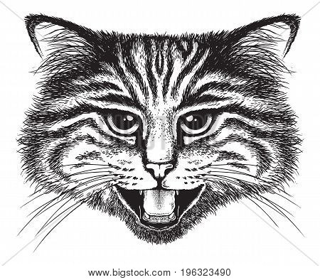 Vector sketch of a long-haired tabby cat hissing in anger or fright