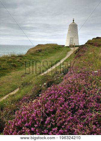 Colourful heather, Cornwall coast path to the Pepperpot, Portreath England UK.