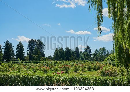 Beautiful landscape with firs flowers weeping willow cumulus clouds blue sky on a sunny summer day. National Botanical Garden (Kiev Ukraine)