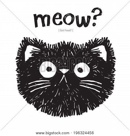 Scruffy black cat says