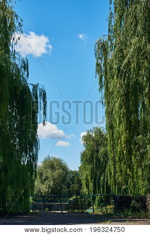 Beautiful landscape with large weeping willows cumulus clouds blue sky on a sunny summer day. National Botanical Garden (Kiev Ukraine)