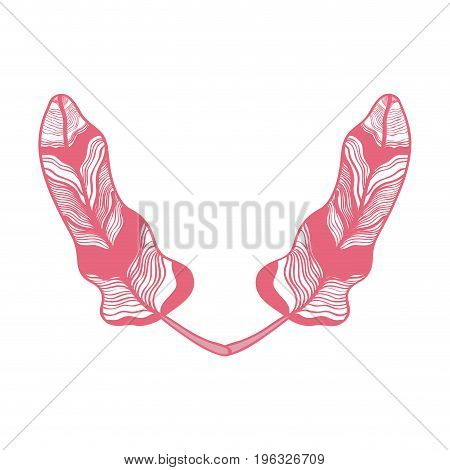 rustic feathers ornate decorative design vector illustration