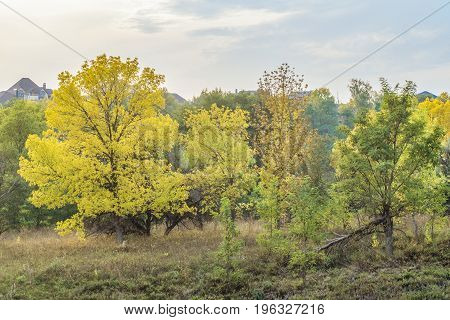Rural landscape with autumn trees. October trees. Belgorod Region Russia.