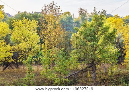 Rural landscape with autumn trees. Belgorod Region Russia.