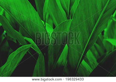 Green leaf pattern on the surface Creative layout made of tropical flowers and leaves. Flat lay. pastel concept