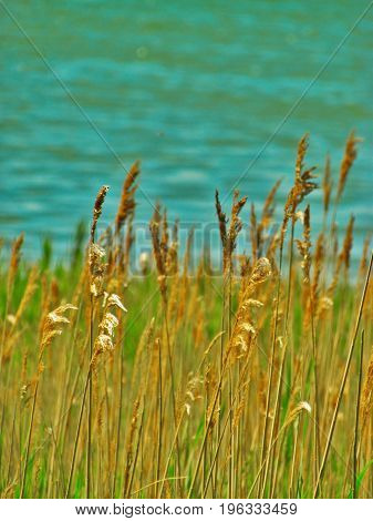 Grass at the Causeway Marshlands in Yarmouth