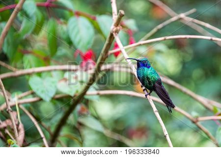 Colorful Hummingbird In Colombia